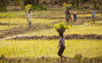 Bill & Melinda Gates Foundation invests $300m to help farmers adapt to climate change