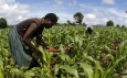 Agri-tech is transforming Africa's agricultural industry